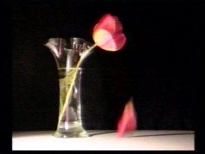 photo-vanite-tulipe